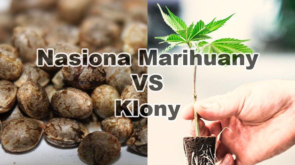 Nasiona Marihuany vs Klony, UprawaKonopi